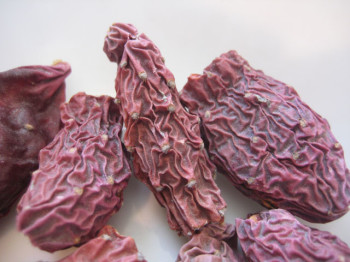 Dried Colorado prickly pears, ie, cactus fruits. Witness their transformation into sauce.